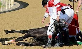 Horse Races Kill Horses