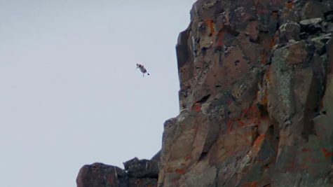 Those Birds That Jump Off Cliffs