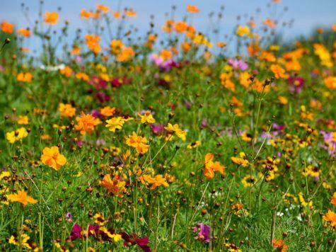 When Flowers Bloom